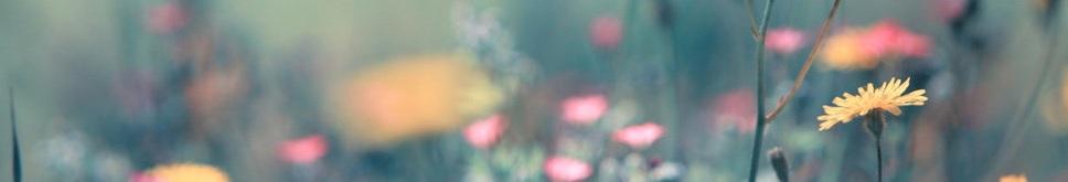 fleurs 102