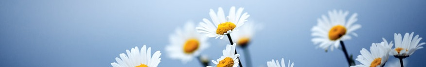 fleurs 108